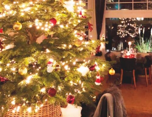 Kerstmenu afhalen en bezorgen